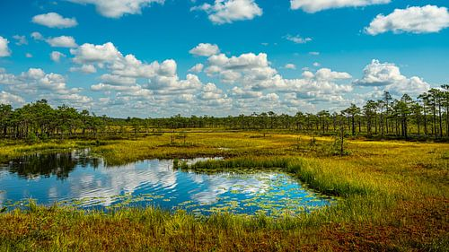 Soomaa Nationaal Park van