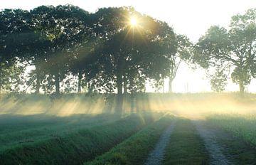 Noordhoek - zonlicht von Esther Leijten-Kupers