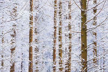 Winter in het bos III van Daniela Beyer