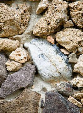 Dolfijn in gesteente van Erna Kampman