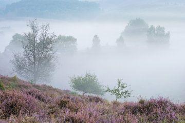Bloeiende heide in de mist von Elroy Spelbos