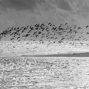 Birds van