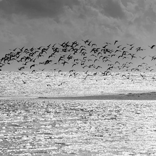 Birds von Carla Vermeend