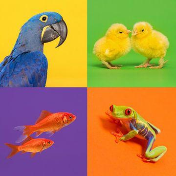 Dieren in kleur van Elles Rijsdijk