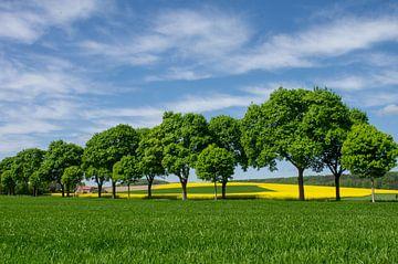 Weites Land, mit leuchtendem Rapsfeld von Tanja Riedel