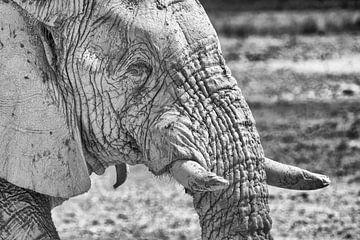 Elefant im Etoscha-Nationalpark, Namibia in Schwarz-Weiß (4) von Tineke Koen