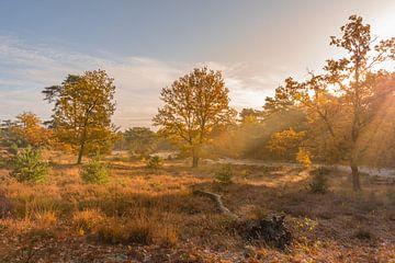 Brunssummerheide an einem schönen Herbstmorgen von John van de Gazelle