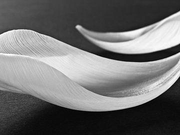 Abstract zwart wit tulpen bloemen macro fotografie van
