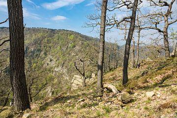Landschaft mit Bäumen im Harz von Rico Ködder