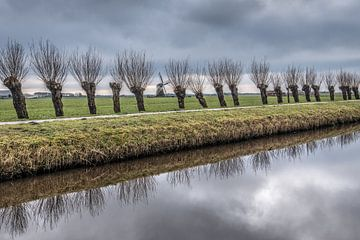 Wilgenbomen en de Klaarkampster molen op een stille winterdag