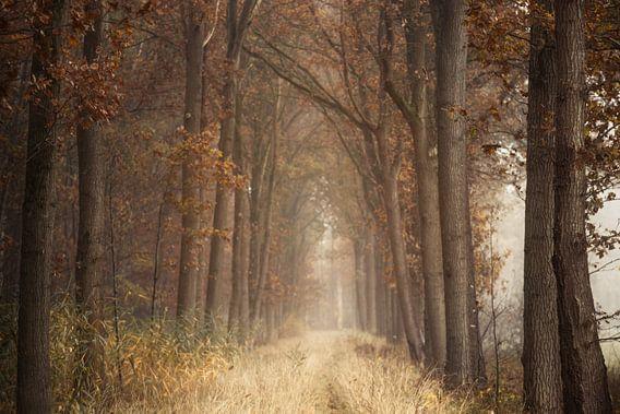 Autumn sighs van Roelie Steinmann