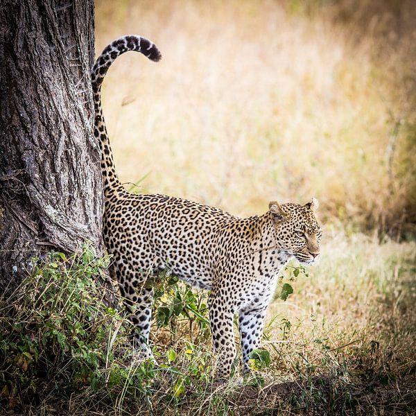 luipaard van Leon van der Velden