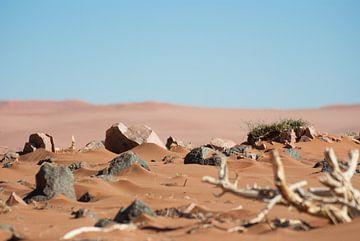 Woestijn elementen van Miranda Zwijgers