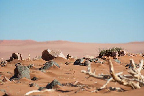 Woestijn elementen