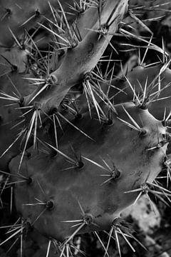 Kaktus von Antoine Ramakers