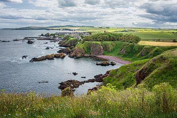 Felsküste bei St. Abbs Head in Schottland