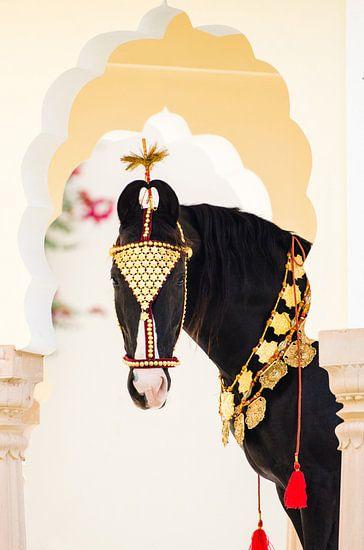 Marwari goud van Merel Bormans