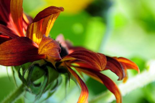 AUTUMN FLOWER - ORIGINAL