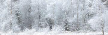 Winterlandschaft mit Schnee im Nationalpark Dwingelderveld von Bas Meelker