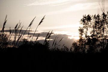 Ondergaande zon sur