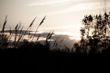 Untergehende Sonne von marco de Jonge