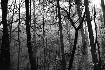 Silhouette des Waldes in der Veluwe von Teun Gerritsen