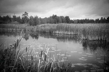 De Alde Feanen, natuur in Friesland. van Marja Verbaan