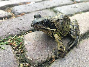 Mr. Frog von Ron van der Meer