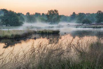 Mist boven de vennen van Peter Bijsterveld