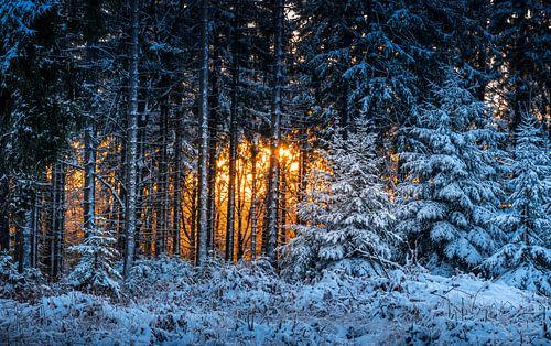Winterbos in de Hoge Venen in vuur en vlam