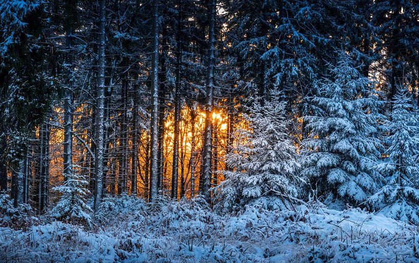 Winterbos in de Hoge Venen in vuur en vlam van Peschen Photography