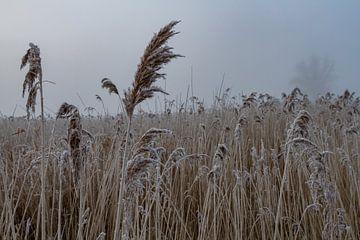 Niederländische Winterlandschaft von Dennis Schaefer