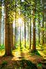 Een ochtend in het bos met felle zonneschijn van Günter Albers thumbnail