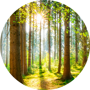 Een ochtend in het bos met felle zonneschijn van Günter Albers