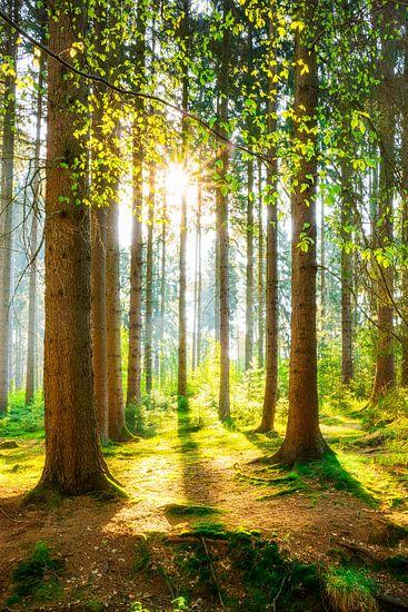 Een ochtend in het bos met felle zonneschijn
