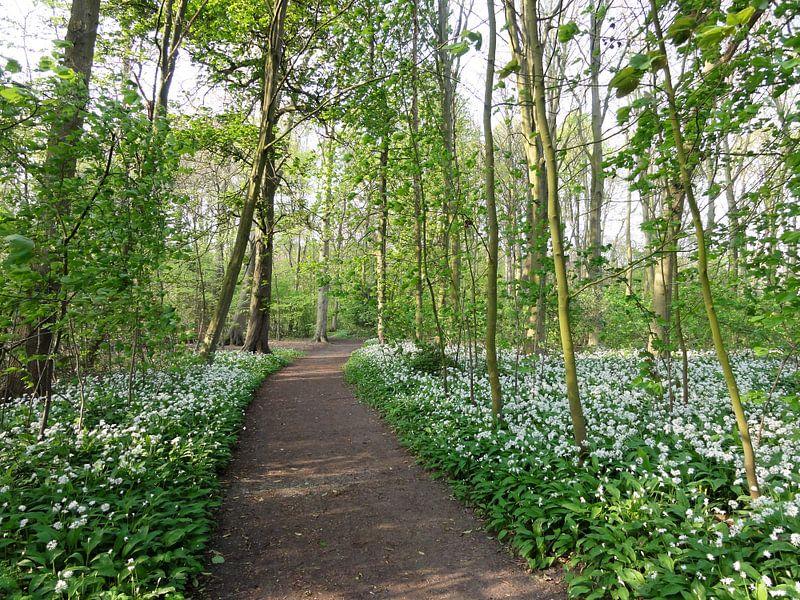 Lente bospad van Lotte Veldt