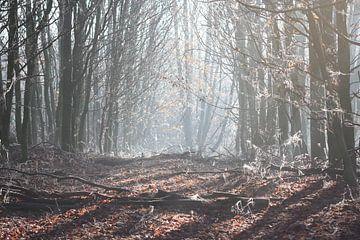 zomers winter ochtend van Danique Van Dijk