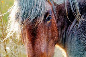 Close-up van een onverstoorbaar paard op Schier van Foto Graaf Eric
