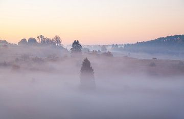 Jeneverbesheide in de mist - Schwäbische Alb van Jiri Viehmann