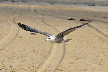 Vogel vliegt over het strand  van Jolien Luyten