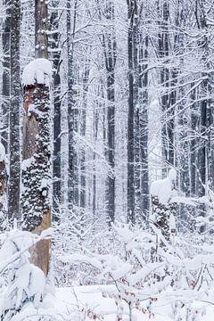 Winter in het Beierse Woud van Dirk Rüter