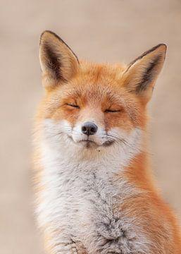 Zen Fox van Dick van Duijn