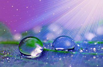 Shine  (Druppels met stralen in paars) van Caroline Lichthart