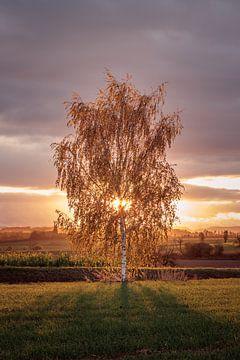 Herbstlicher Sonnenaufgang von Severin Frank Fotografie