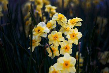 Geel, Bloemen op donkere achtergrond van Petro Luft