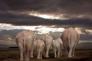 olifanten verlaten de Aarde .
