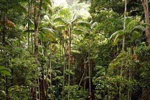 Rainforest van
