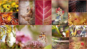 Collage &Zitat;Altweibersommer&Zitat; von Els Fonteine