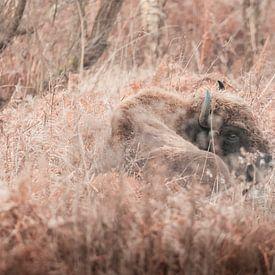 Wisent in sprookjesachtig landschap | Slikken van de Heen, Zeeland | wildlife Nederland van Dylan gaat naar buiten