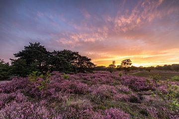 Sonnenuntergang in den violetten Mooren! von Peter Haastrecht, van